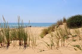 Pour une envie de nature, dirigez vers la plage sauvage des Sables d'Olonne, tout proche du Calme des Pins hotel